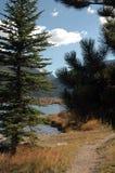 See hinter den Bäumen Stockbild