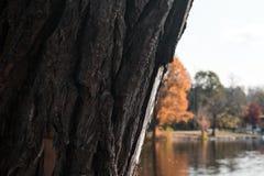 See hinter den Bäumen während des Herbstes lizenzfreie stockfotos
