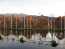 See im Fall mit den Bäumen nachgedacht über das Wasser lizenzfreie stockfotos