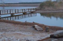 See im ornithologischen Park Stockbild