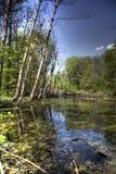 See im tiefen Wald Stockbilder