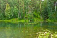 See im Wald Lizenzfreie Stockfotos