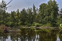 See im Wald Stockbilder