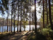 See im Wald lizenzfreie stockbilder