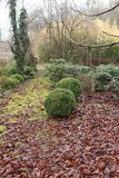 There are various trees in the garden and two green round bush. Royalty Free Stock Images