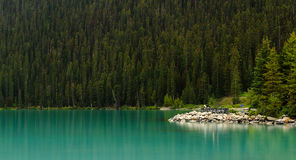 See-Louise Water Shore Pine-Wald Lizenzfreie Stockbilder