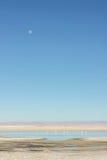 See mit Flamingos in der Wüste Stockfotografie
