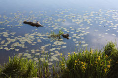 See in mit grünem Gras auf dem Ufer und einer Anmeldung das Wasser Lizenzfreie Stockfotos