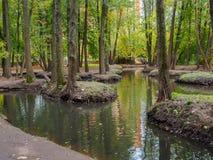 See mit vielem kleinen ostavkov, die Bäume wachsen Stockfotografie
