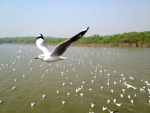 See more when you fly higher. A seagull fly above its flock Royalty Free Stock Photography