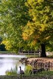 See-Pavillon, Zypresse-Knie und Vögel auf einem See lizenzfreie stockfotos