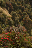 See of red flowers on the trees (India). Beautiful branches of a tree against red flowers of mountains trees royalty free stock image