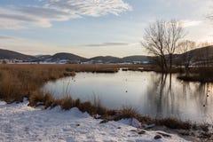 See, Schnee, Bäume und Himmel Stockbild