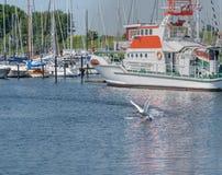 See-Segeljacht im Hafen der Stadt Groemitz, Nord-Deutschland, Küste von Ostsee morgens 09 06 2016 Reise, Feiertag in Meer, Landsc Lizenzfreie Stockfotos