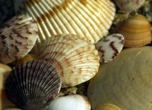 See shells on the beach Royalty Free Stock Images