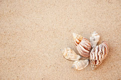 See shells Stock Photo