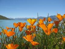 See Tekapo, Neuseeland Lizenzfreies Stockbild