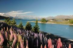 See Tekapo, Neuseeland Lizenzfreie Stockbilder