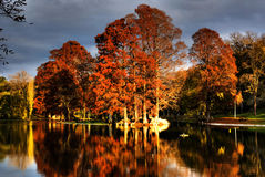 See und Bäume im Herbst Lizenzfreie Stockbilder