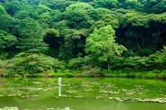 See und Baum Stockbild