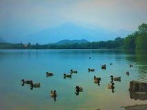 See und Enten Stockfoto