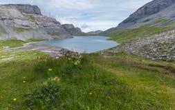 See und grüne Wiese mit Blumen auf Gemmipass Stockfoto