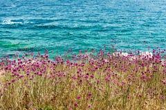 See-und Sonnekroate und Purpurblumen auf der Klippe: die Insel von St Andrew Lizenzfreie Stockbilder