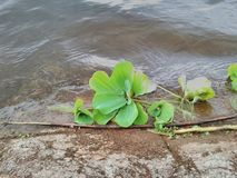 See-Vegetation Stockfoto