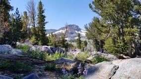 See Winnemucca an ungefähr 9000 Fuß mit perfekter Schönheit stockfoto