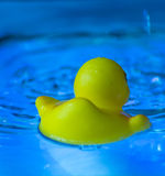 SEE YOU LATER RUBBER DUCKY Royalty Free Stock Photo