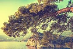 Seeansicht mit felsiger Küste und Kiefern Lizenzfreie Stockfotografie