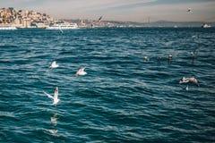 Seeansicht mit Seemöwen und Schiffen in Istanbul stockbilder