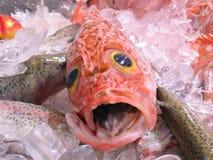 Seebarsch für Verkauf im Fischmarkt Stockbilder