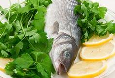 Seebarsch-Fische auf einer Platte Lizenzfreie Stockfotografie
