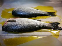 Seebarschfische Lizenzfreie Stockfotos
