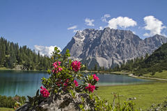 Seebensee amd alpine rose Stock Photo