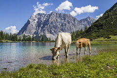 Seebensee lake in Tyrol Royalty Free Stock Image