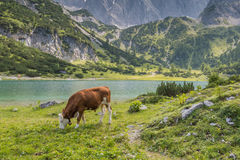 Seebensee scenisk bergsjö Arkivfoton