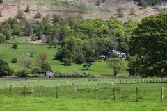 Seebezirkslandschaft mit grünen Bäumen und Schafen, England Lizenzfreies Stockfoto