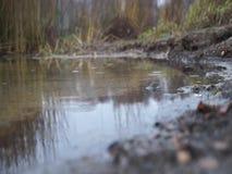 Seeblick an einem regnerischen Herbsttag stock footage