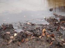 Seeblick an einem regnerischen Herbsttag stock video