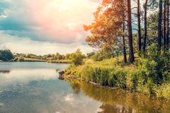 Seeblick mit Bäumen auf dem Ufer Stockbild