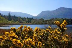 Seeblick mit Bergen und Blumen Stockfoto