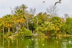 Seeblick mit den fliegenden Vögeln und grüner Vegetation im Park des Ciutadella stockfotografie