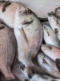 Seebrassen für Verkauf stockbild