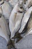 Seebrassen für Verkauf stockfoto
