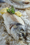 Seebrassen gebacken im Salz Stockbild
