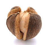 Seed Royalty Free Stock Image