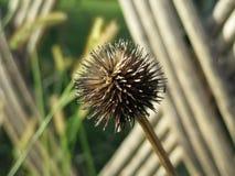 seed Lizenzfreies Stockbild