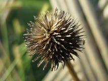 seed Lizenzfreies Stockfoto